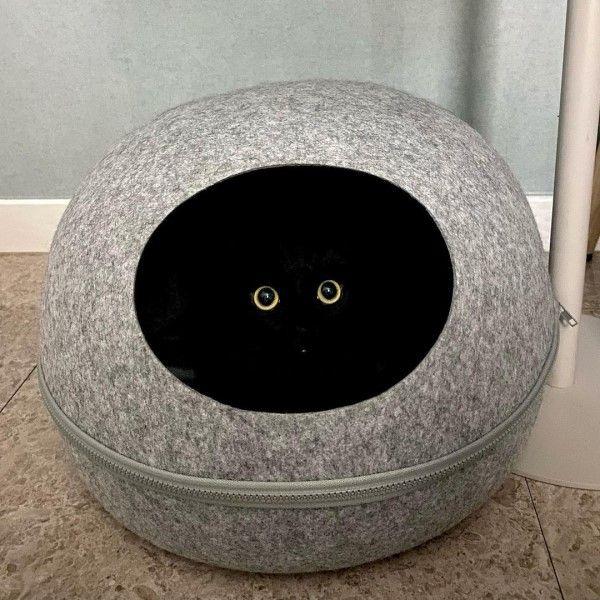 ▲由於牠實在太黑,躲在貓窩裡就只看見一對圓圓大眼睛(圖/IG@meon___ji)