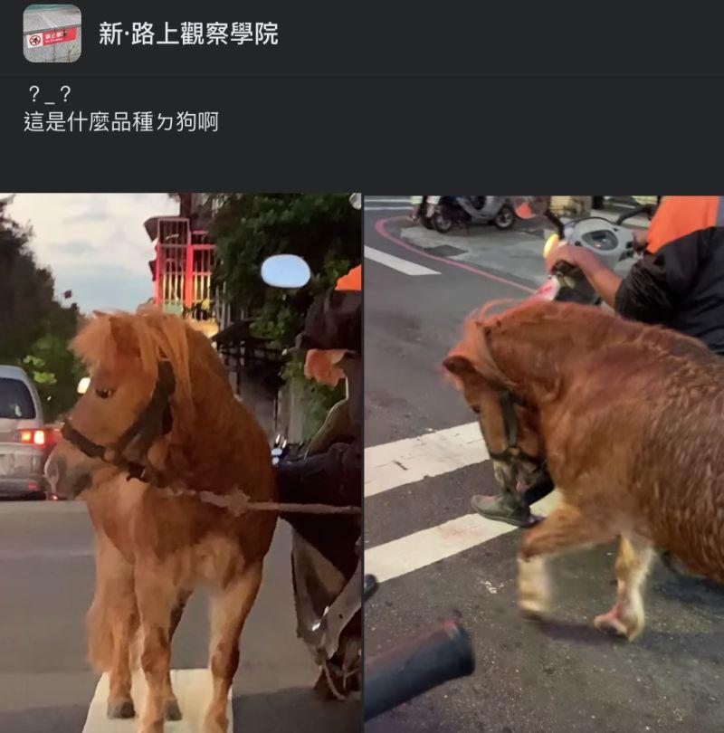 ▲網友在路上看見有機車騎士遛馬,十分震驚。(圖/翻攝自《新·路上觀察學院》臉書社團)