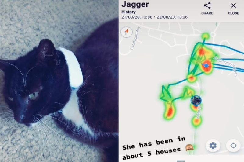 主人放「追蹤器」 貓貓行蹤全暴露:原來牠還有五個窩!