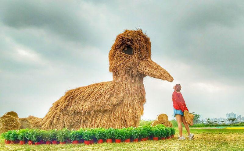 想體驗農村特色?歡迎來參觀三重鴨鴨公園地景藝術