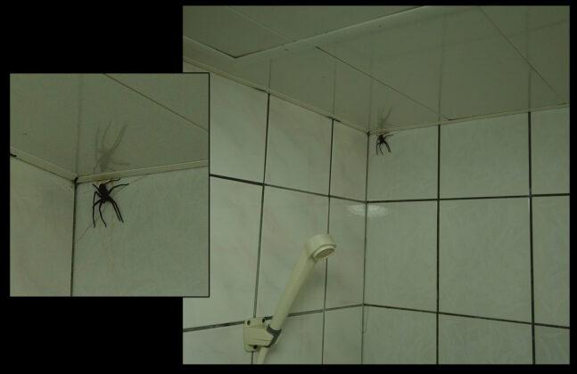 ▲一位外國人在洗燥時突然與喇牙面對面。(圖/取自臉書Communauté française à Taiwan社團)