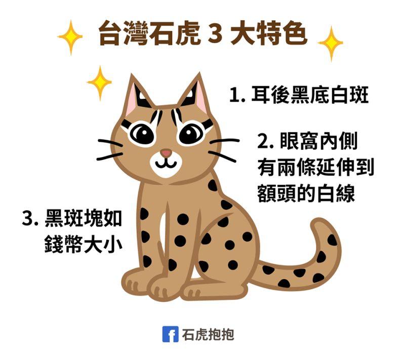 ▲簡單三招分辨石虎(圖/FB@石虎抱抱提供)