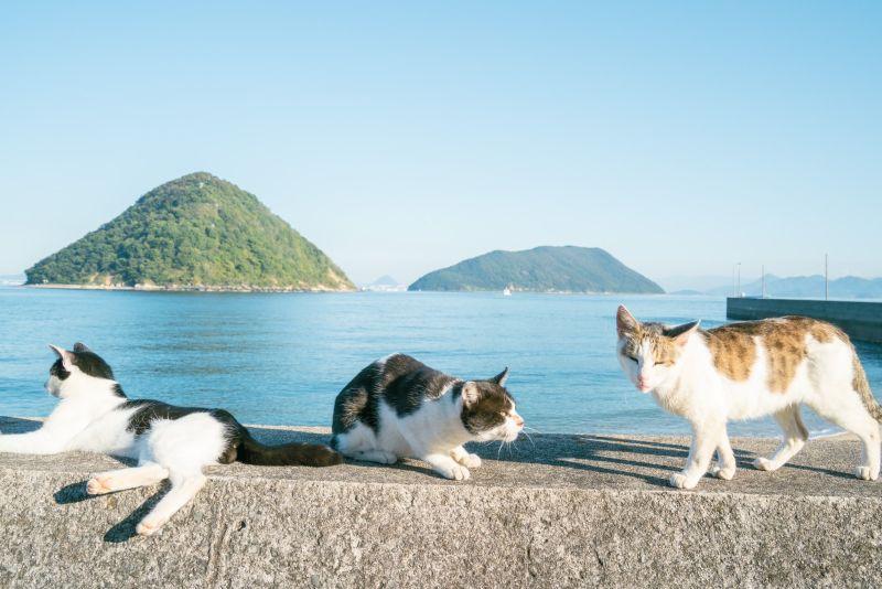 ▲日本攝影師三谷ユカリ被這三隻貓給吸引!(圖/Twitter@mitsuyuka_lp)