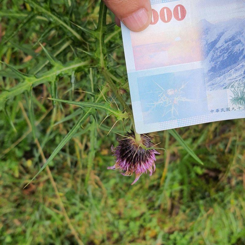 ▲一位外國網友在爬玉山時有了驚人的發現。(圖/取自u/shaz_tw/Reddit)