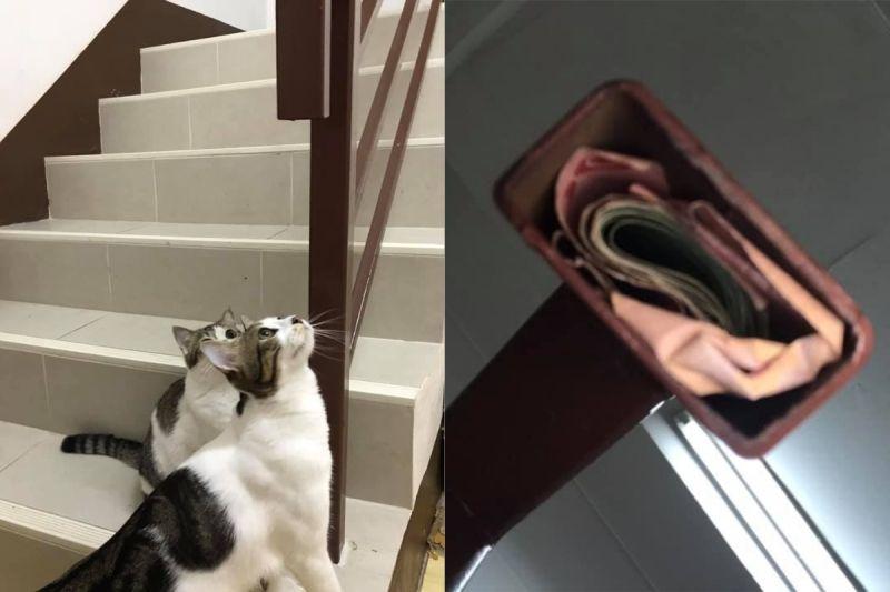 ▲泰國一名女網友在進家門時,發現兩隻貓正對著樓梯喵喵叫,她蹲下一看立馬笑了。(圖/翻攝自《泰國清邁象粉專》 )