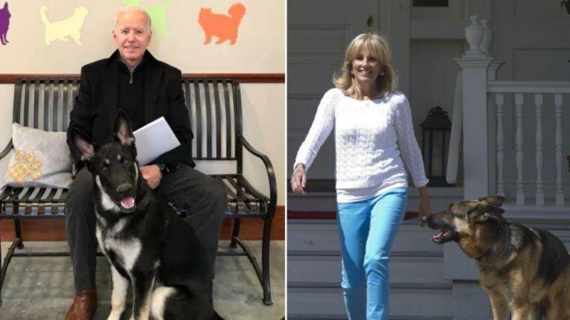 與愛犬玩耍扭傷!78歲拜登右腳髮絲狀骨折 恐須穿矯正鞋