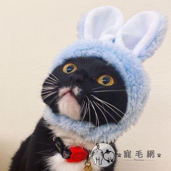 ▲「OA」是一隻個性好又無厘頭的貓咪(圖/IG@milkfei0828授權提供)