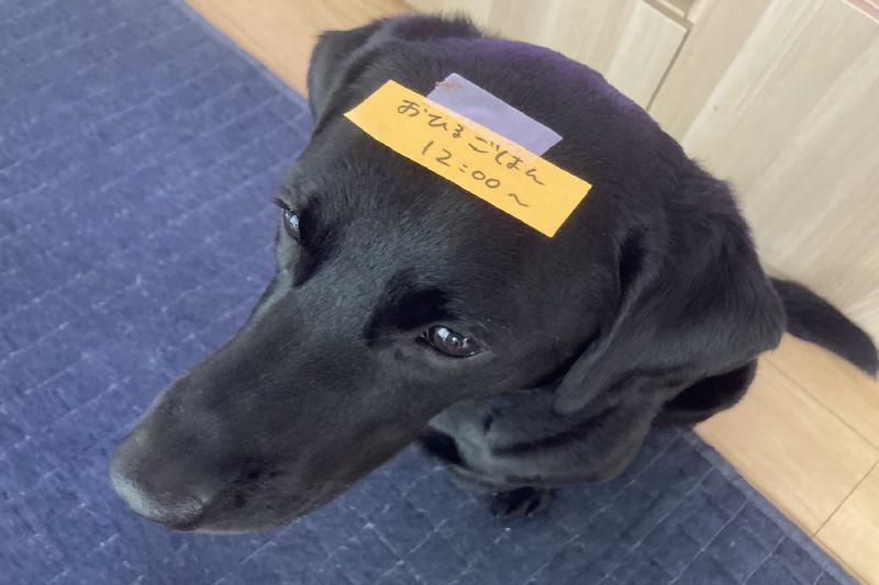 忙做家務沒空 媽媽出奇招讓「傳信狗」上樓送訊息!