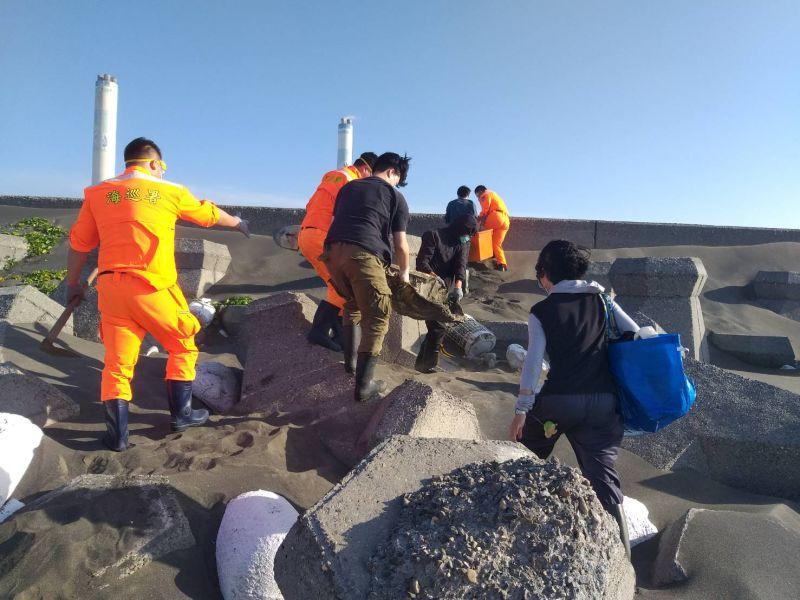 麥寮岸際2隻死亡保育海龜 海巡人員協助處理
