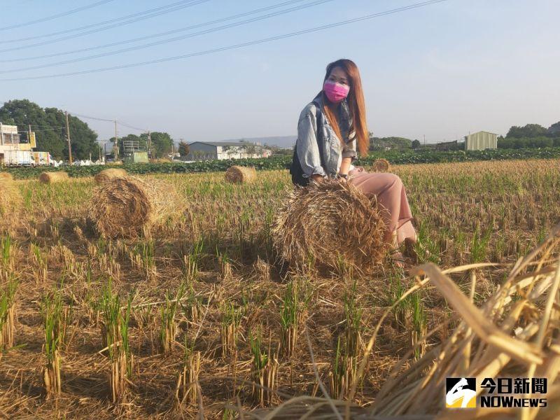 影/解決「燒稻草」造成空污 青農免費收運稻草
