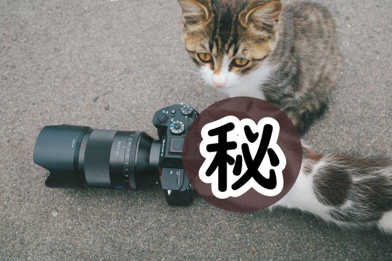 「拍貓反被小貓拍」!網友一看笑歪:喵星人又進化了嗎?