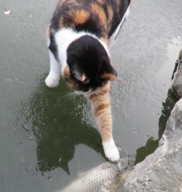 ▲貓掌敲敲敲:就是要這隻魚~(圖/Youtube@haha
