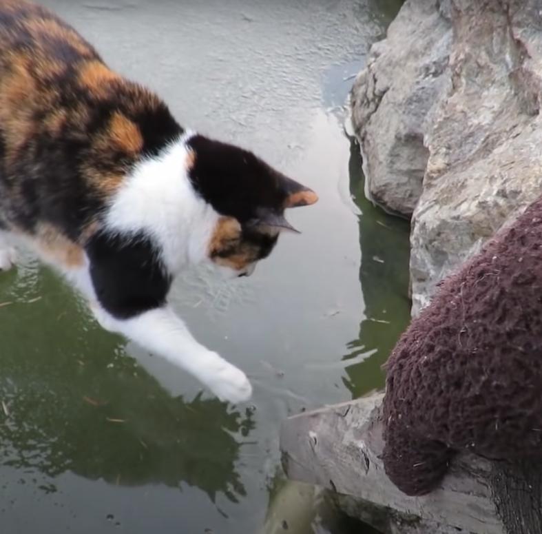 ▲一人一貓同心協力對著冰面敲敲敲!(圖/Youtube@haha