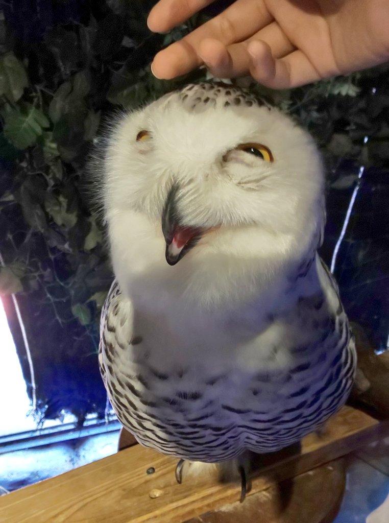 ▲推主@yuttttttata:這隻貓頭鷹是壞掉了嗎?(圖/Twitter@yuttttttata)