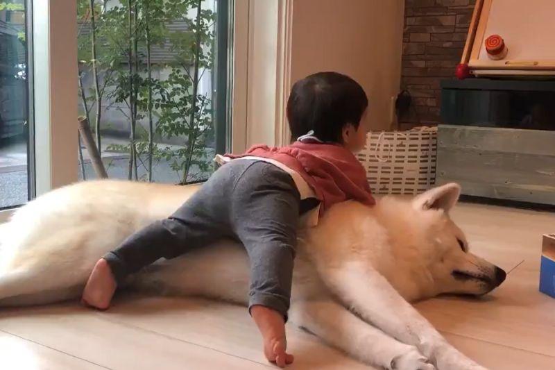 「大毛汪」任憑小寶寶擺布 牠一臉淡定:佛系育兒最高境界