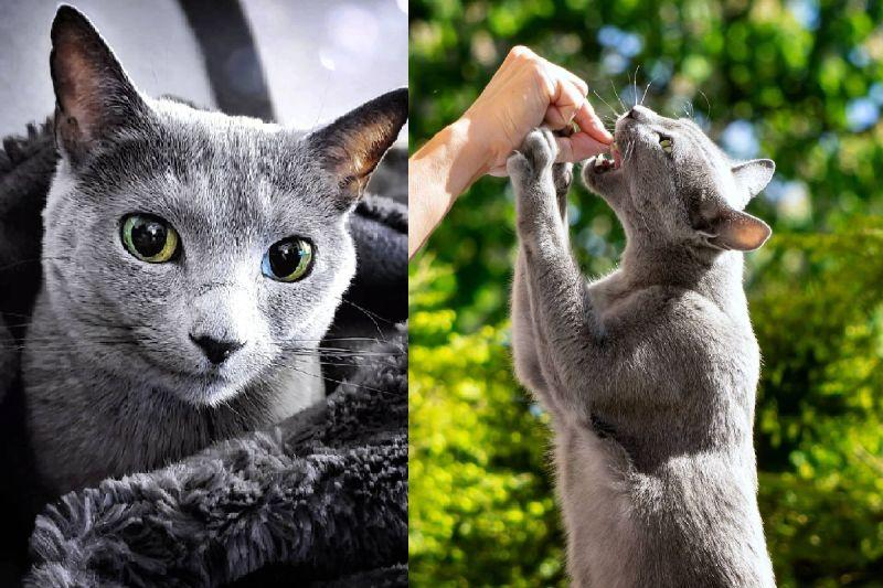 轉動<b>光線</b>角度 貓咪寶石大眼「魔法般」由綠轉藍!