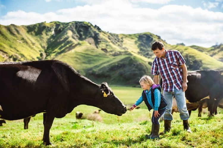 ▲自營牧場的優勢,就是擁有照顧牛隻的專業知識,確保牛在天然環境中自然成長,產出符合高標準的乳汁。(圖/品牌提供)