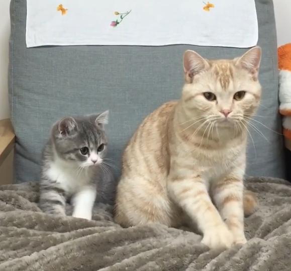 ▲左邊是小寶寶Tongki,右邊則是哥哥豆腐!(正在一起踏踏)(圖/Instagram@dooboo_cat)
