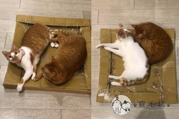 ▲程小姐表示貓咪們都喜歡免錢的紙箱,花錢買的貓窩反而不愛(圖/網友程小姐授權提供)