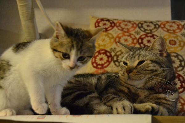 ▲小貓:老大,以後這個家就由我們統治了!(圖/twitter@karasuyasatoshi)