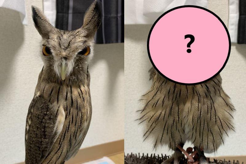 貓頭鷹看到主人前後反差超大 網笑:確定是同一隻?