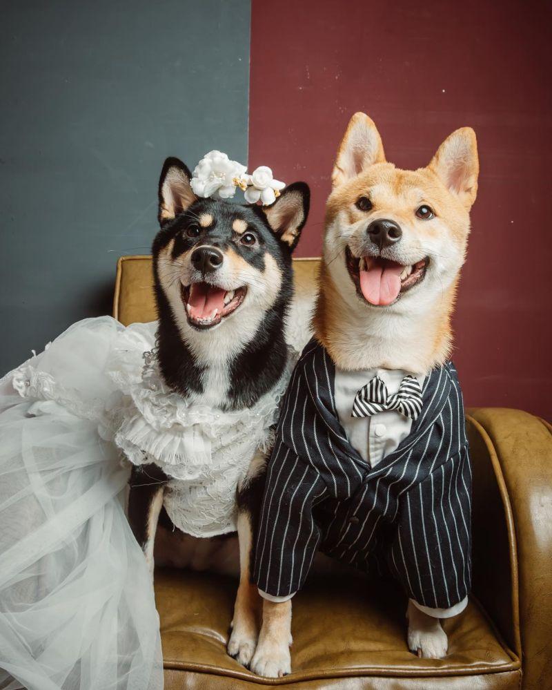 ▲哈妮:耶一!跟哥哥結婚是偶的夢想(誤)起爭議的就是中間的麻糬和右邊的哈妮!(Facebook@柴柴韓森&哈妮一家生活日常授權提供)