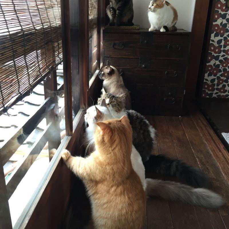 ▲家裡養了非~常多隻貓!(猜猜看有幾隻?)(圖/Twitter@CatApartment)