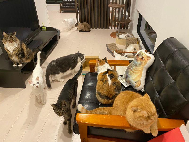 ▲再感受一下這貓貓的密集度!(圖/Twitter@CatApartment)