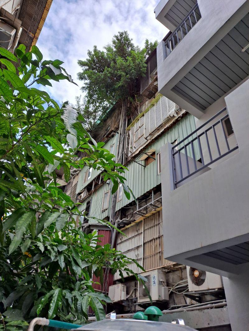 ▲該棟公寓的五樓住戶,因為在頂樓種植榕樹,生命力極強的樹根除了在五樓盤根錯節外,也持續向下延伸到三樓及四樓,破壞公寓建築結構,讓樓下民眾苦不堪言。(圖/李柏毅辦公室提供)