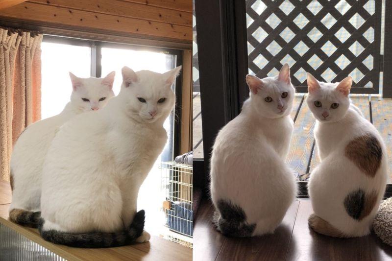 貓姐妹好<b>默契</b>「同步率太高」 網:確定不是複製貼上?