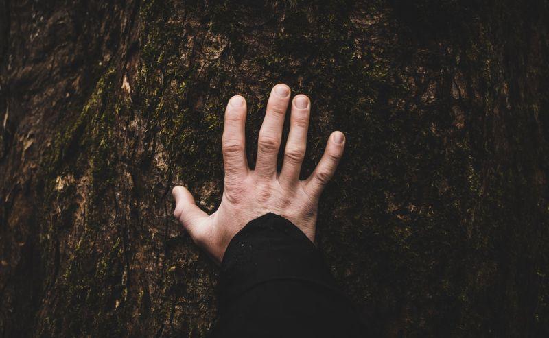 ▲從哪個手指開始剪指甲,可以看出你的真實個性。(示意圖/翻攝自Unsplash)
