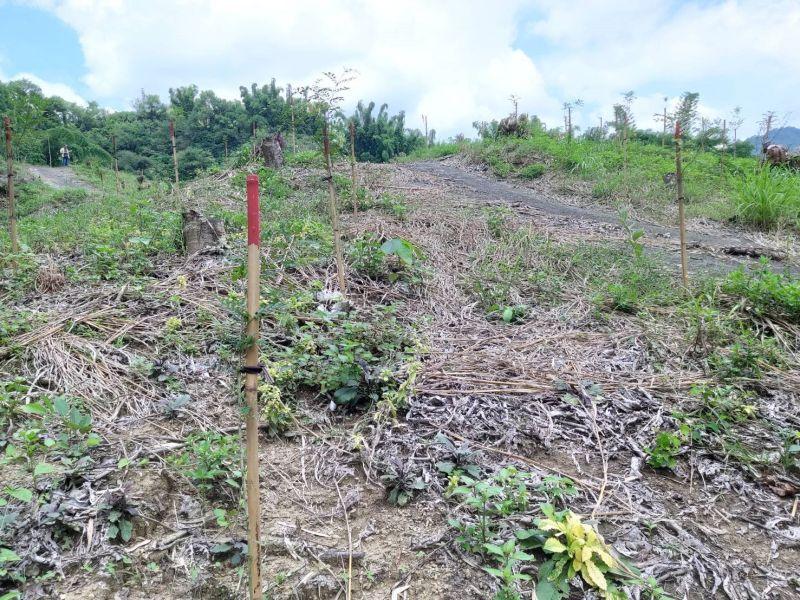 ▲Yahoo奇摩與林務局嘉義林區管理處合作認養造林地,在台南市玉井區種植2000棵小樹苗。(圖/Yahoo奇摩提供)
