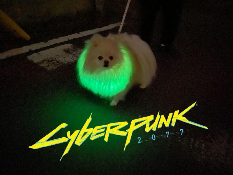 ▲cyberdog