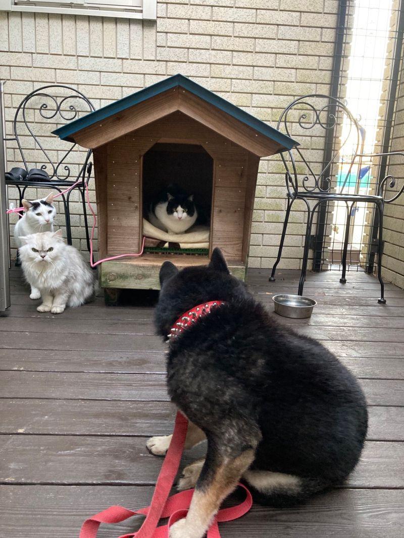 ▲汪:那是窩的狗屋……