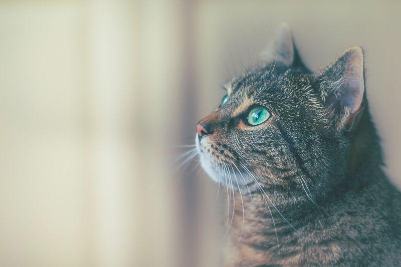 ▲原來沙發底下真的有一隻貓。(示意圖/取自unsplash)