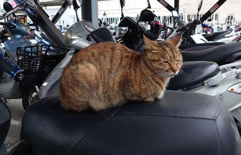 ▲貓咪超愛「霸佔機車坐墊」?養貓族吐3關鍵。(圖/翻攝自PPT)