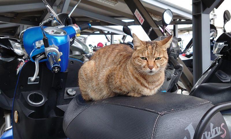 ▲養貓族則指出「貓咪喜歡高的地方」、「機車墊軟軟的比較舒服,尤其太陽曬過」和「貓都會留下自己的氣味」為3個「愛佔機車坐墊」的致命關鍵。(圖/翻攝自PPT)