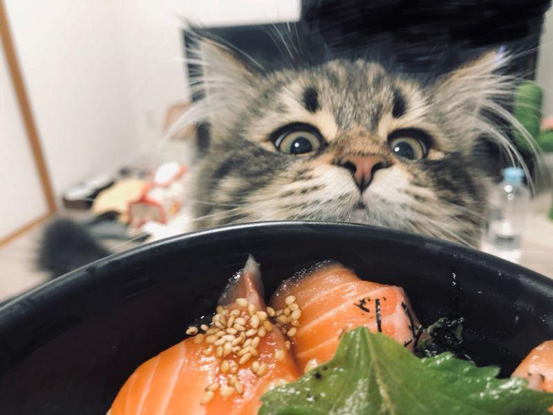 ▲這是鮭魚的味道~(圖/Twitter@ymnc_rf)