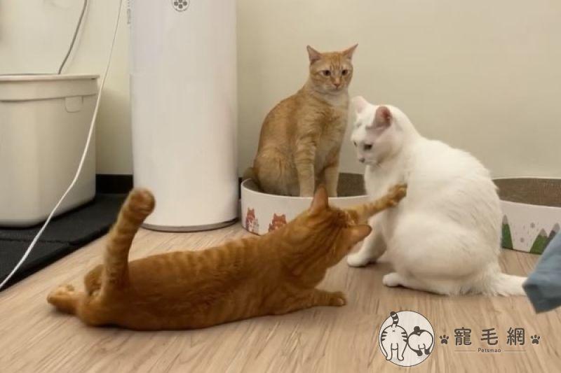 影/哥姐在<b>吵架</b> 白目橘「滑」進戰場拍背:別生氣嘛!