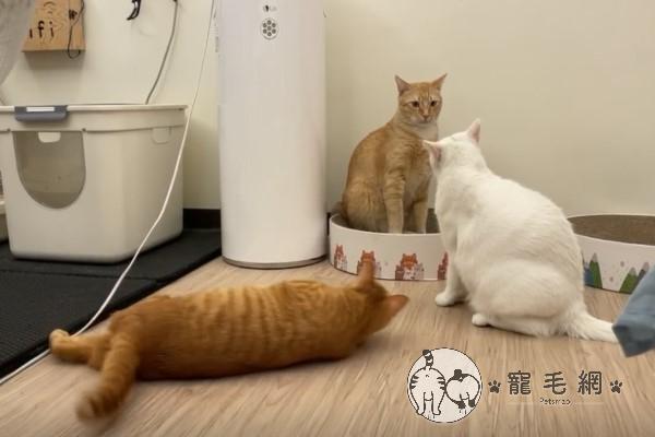 ▲這天牠發現白麻嘛與Mumu正在吵架,沒想到牠腳一蹬,竟然滑進戰場……(圖/粉專三角鐵的功夫授權提供)