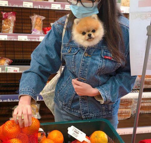 ▲江江!就是把狗狗包在外套裡!(圖/Instagram@miffytinypom)