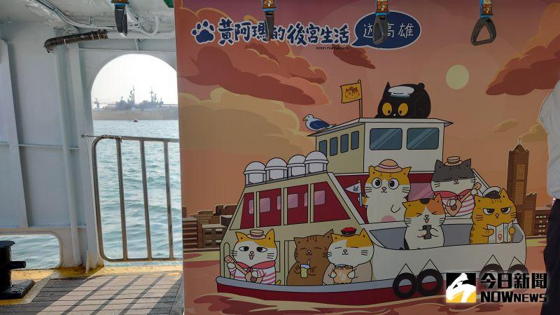 ▲「黃阿瑪的後宮生活」後宮的貓咪們出現在渡輪的各個角落。(圖/記者鄭婷襄攝)