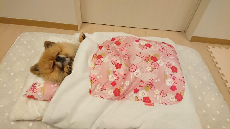 ▲啊……好軟的床、好暖的床!(圖/Twitter@harepiyopiyo)