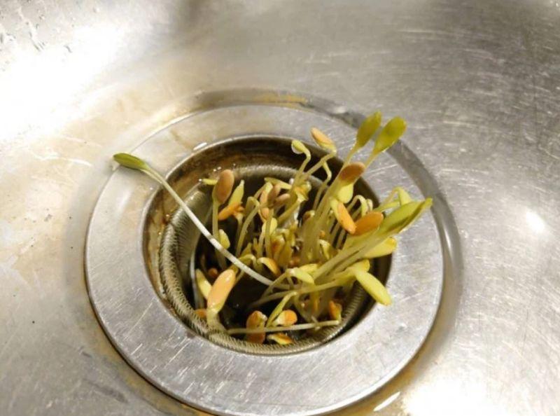 ▲老公回家才發現,洗碗槽排水孔竟然「發芽」了。(圖/翻攝自《Dcard》
