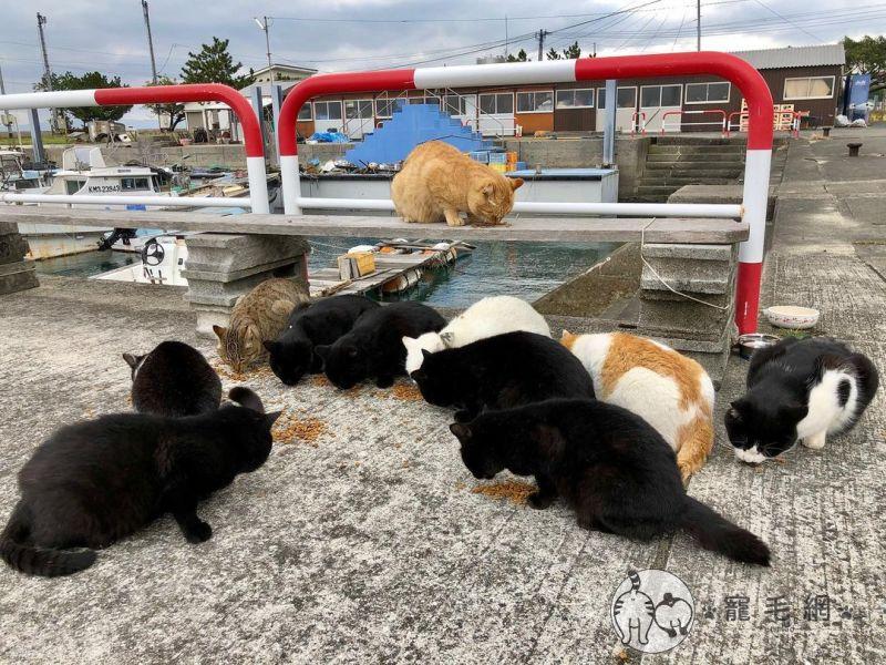 ▲有機會千萬別錯過這座可愛的貓島(圖/IG@cat_island_traveler授權)