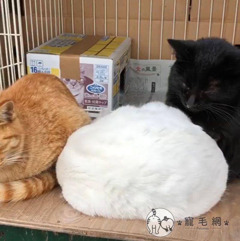 ▲當他看到3隻貓擠在一起,白貓還睡成一團的模樣,突然冒出一個想法!(圖/IG@cat_island_traveler授權)