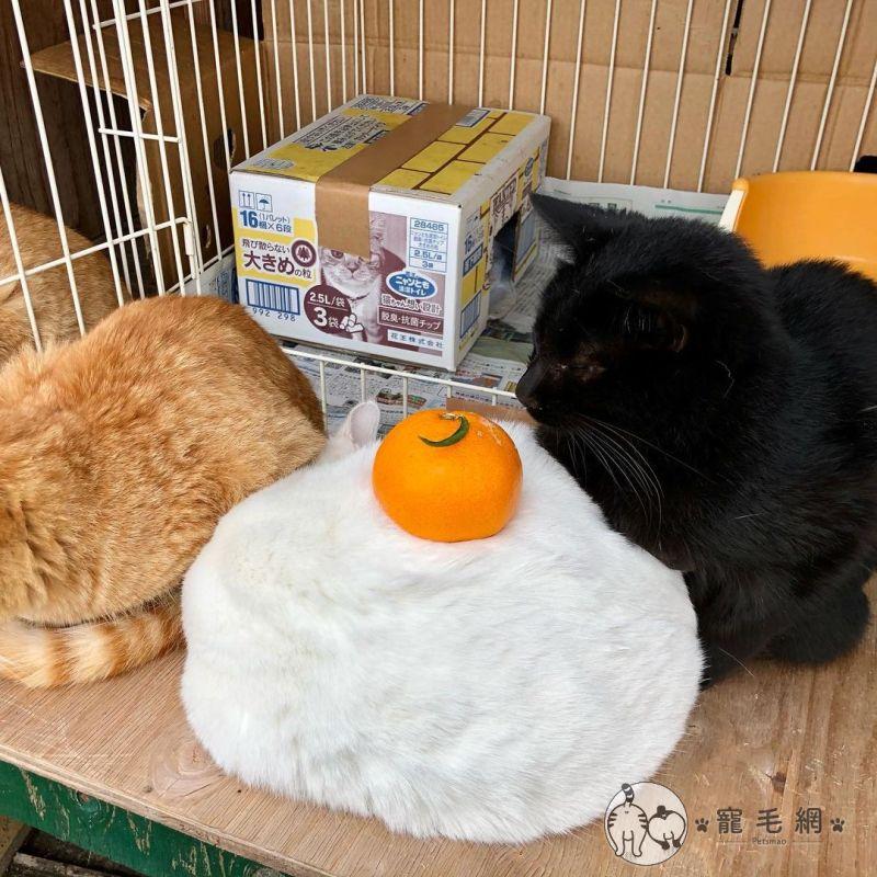 ▲隨後放上一顆橘子(圖/IG@cat_island_traveler授權)