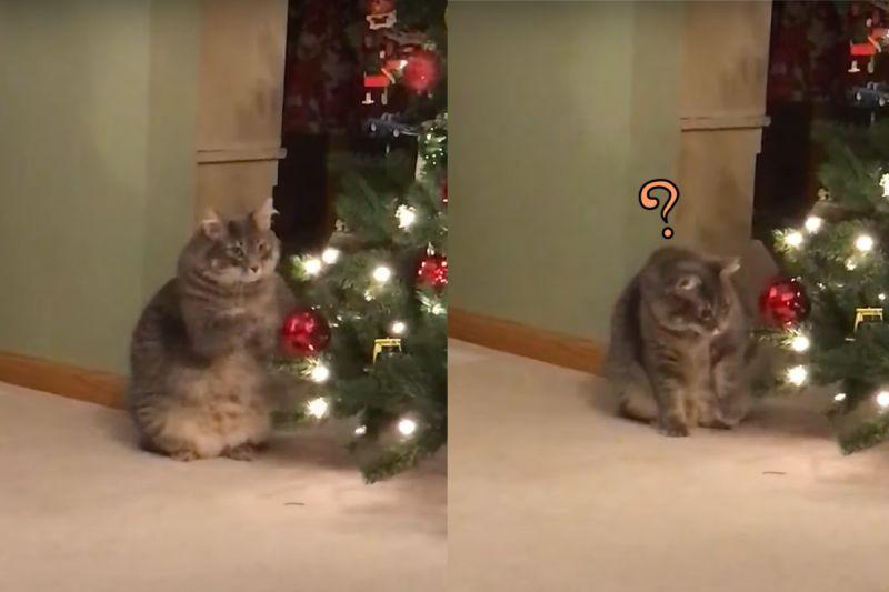 虎斑貓鎖定聖誕球 使出「喵掌連環拳」:怎麼不會掉?