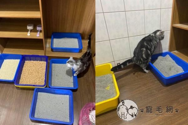 ▲就是無論他放了各種貓砂,意麵就是要大便在貓砂盆外(圖/網友沈白白授權提供)
