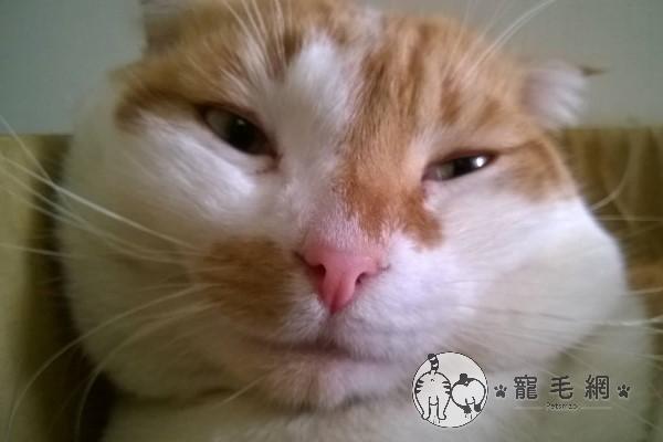 ▲阿肥:倫家想變成三花貓不行嗎?(圖/網友翁志強授權提供)